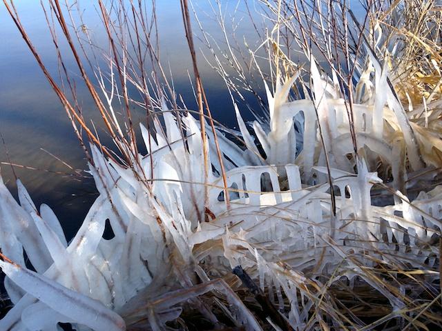 Ice Reeds